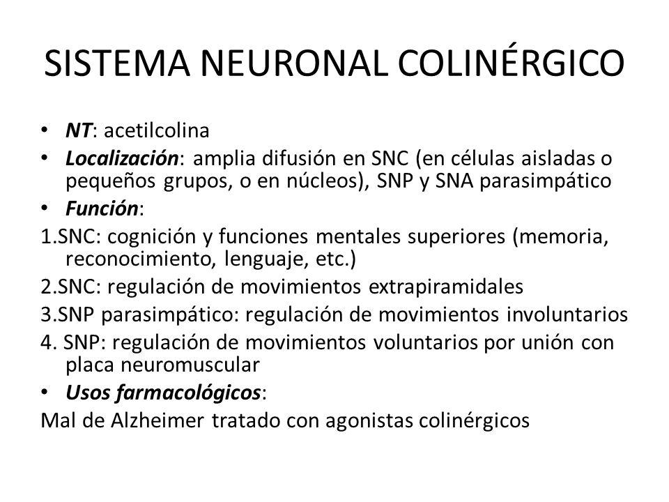 SISTEMA NEURONAL COLINÉRGICO