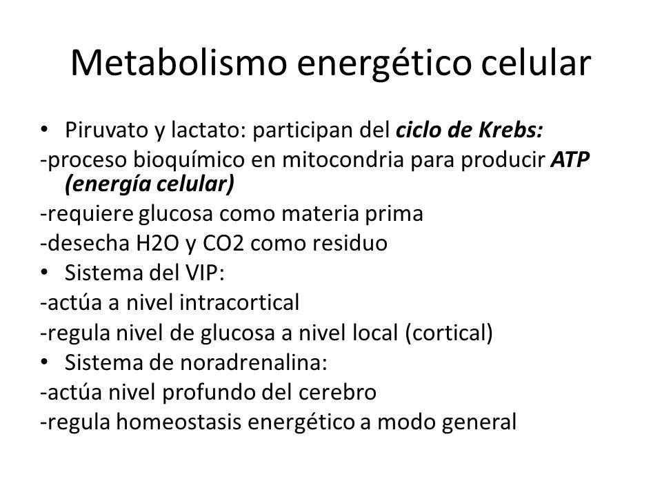 Metabolismo energético celular