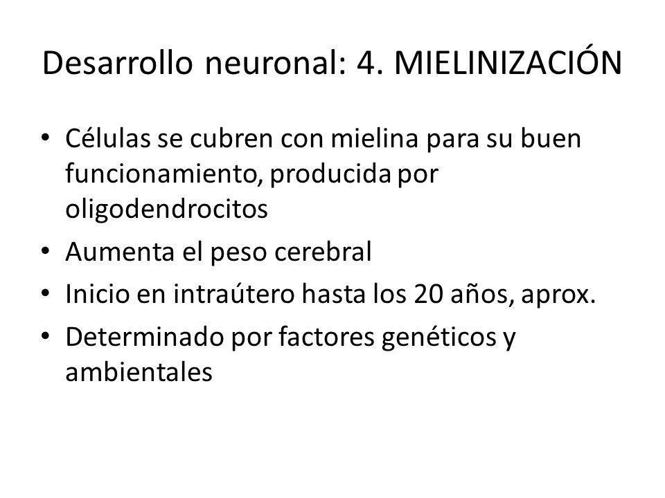 Desarrollo neuronal: 4. MIELINIZACIÓN