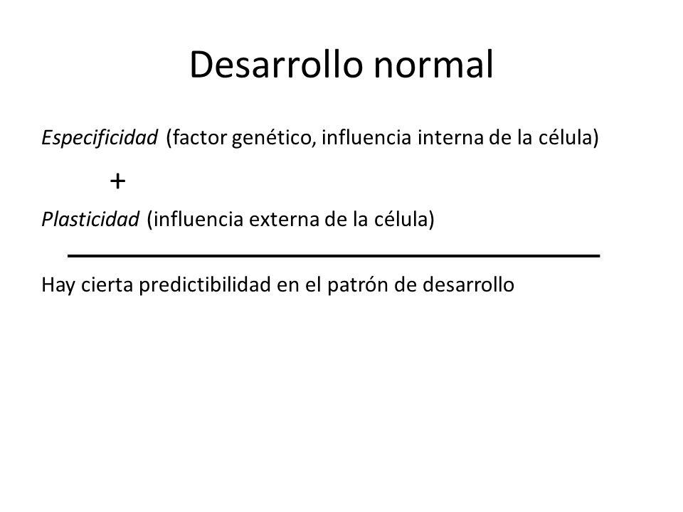 Desarrollo normal Especificidad (factor genético, influencia interna de la célula) + Plasticidad (influencia externa de la célula)