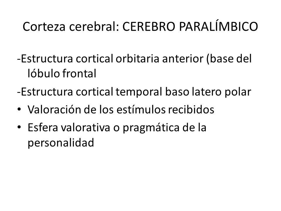 Corteza cerebral: cerebro paralímbico
