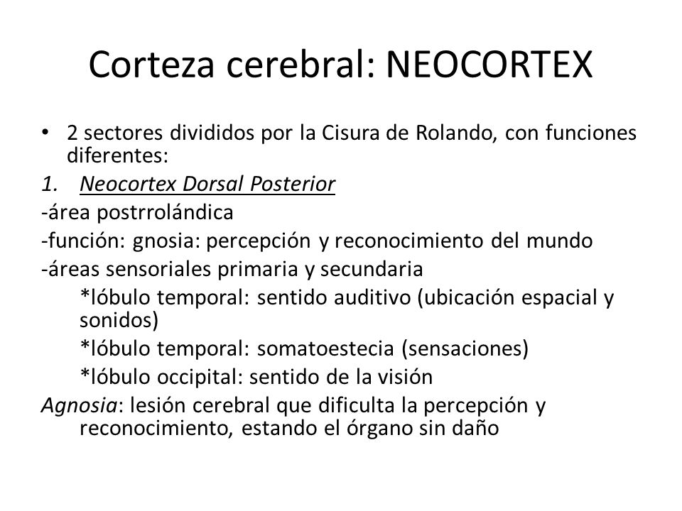 Corteza cerebral: Neocortex