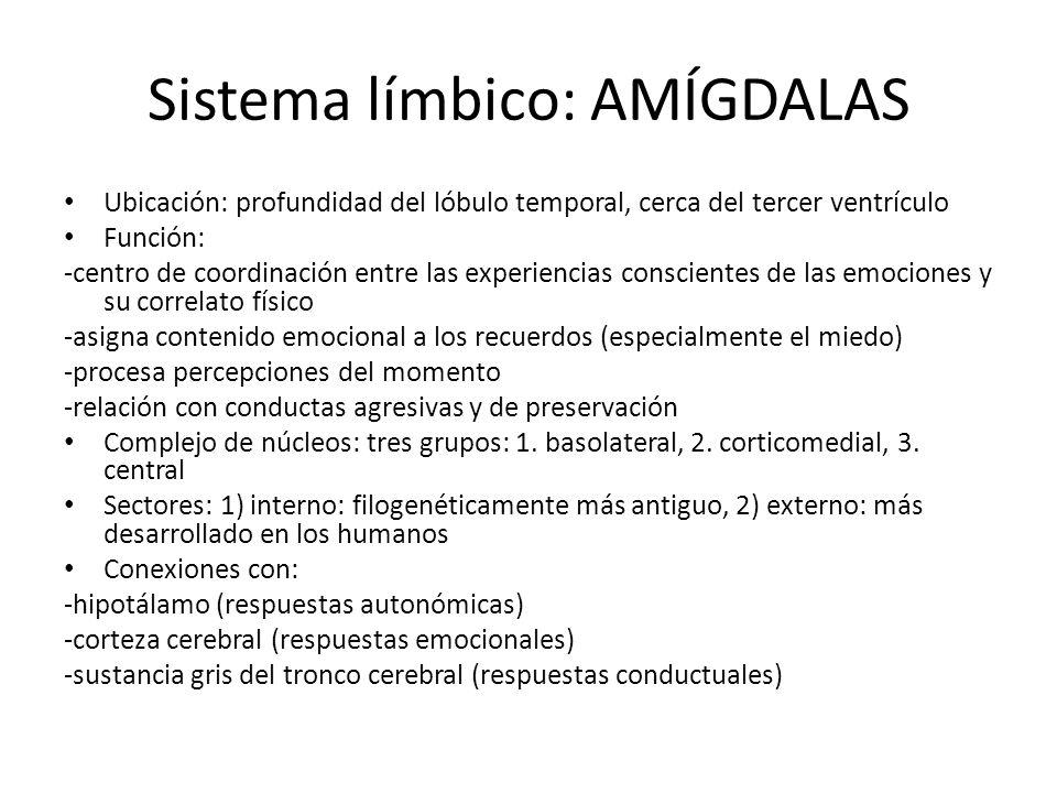 Sistema límbico: AMÍGDALAS
