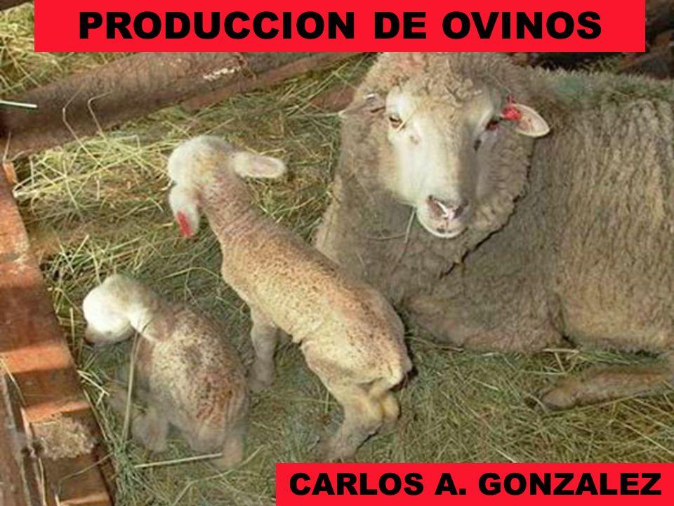 PRODUCCION DE OVINOS CARLOS A. GONZALEZ