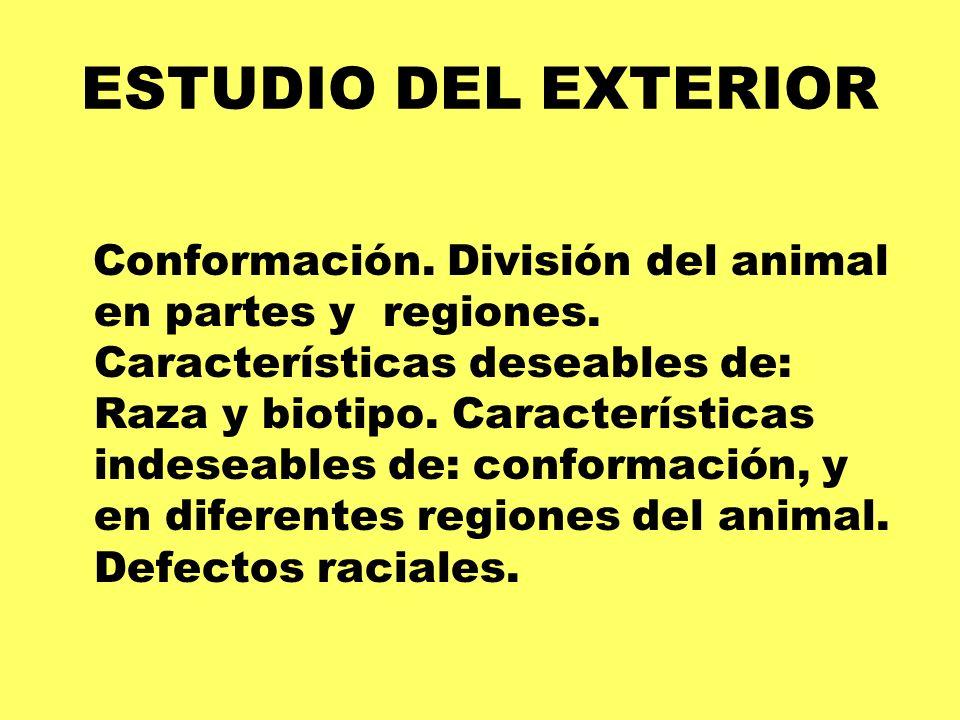 ESTUDIO DEL EXTERIOR