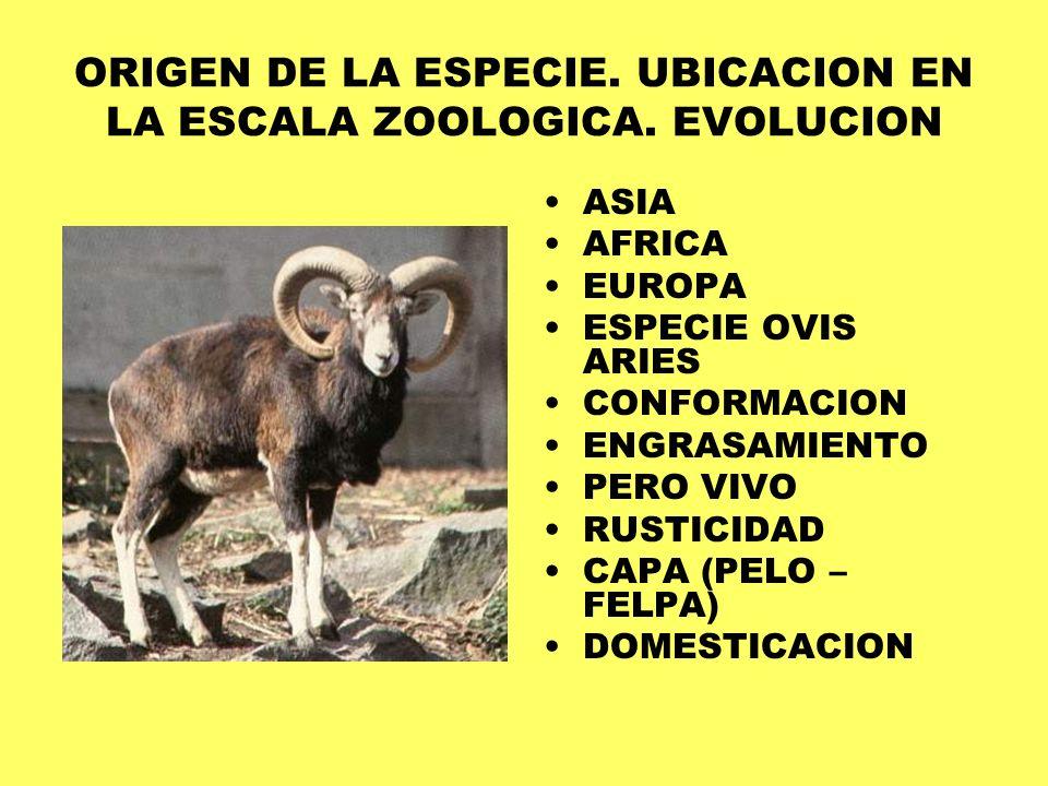 ORIGEN DE LA ESPECIE. UBICACION EN LA ESCALA ZOOLOGICA. EVOLUCION