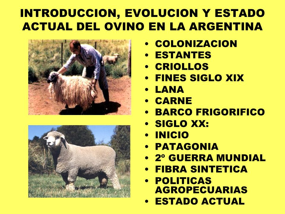 INTRODUCCION, EVOLUCION Y ESTADO ACTUAL DEL OVINO EN LA ARGENTINA