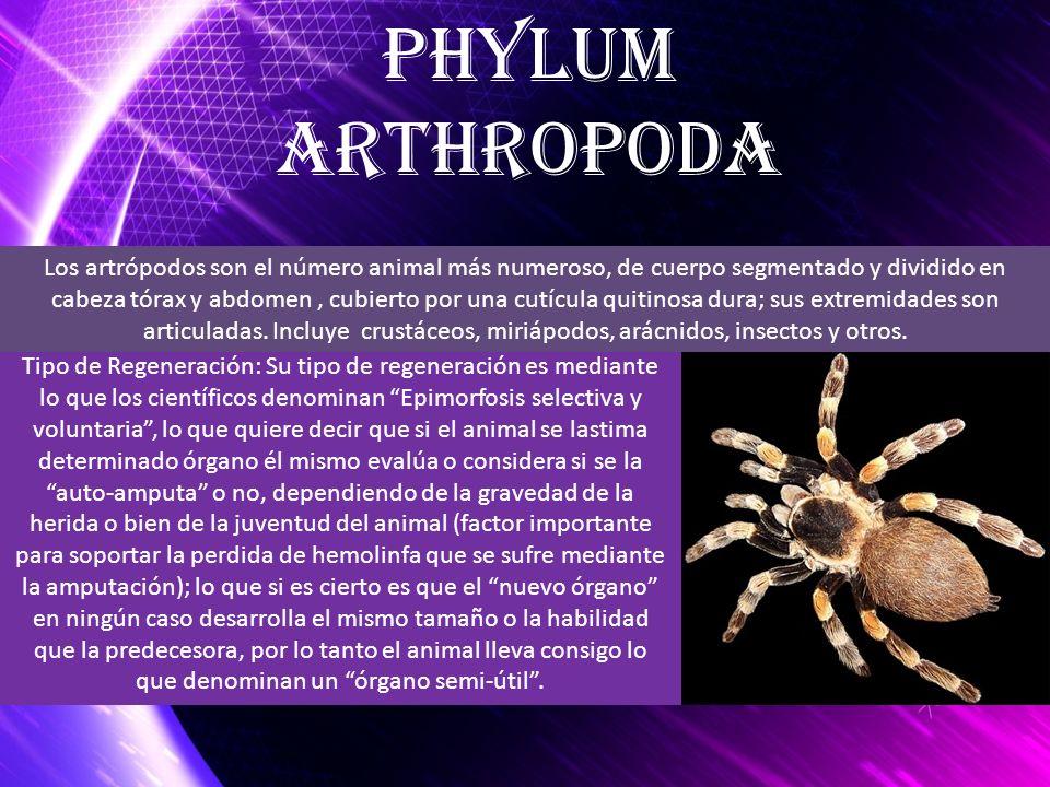 Phylum arthropoda.