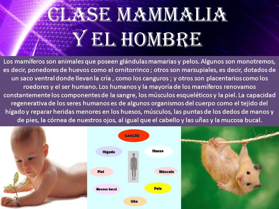 Clase mammalia Y el hombre