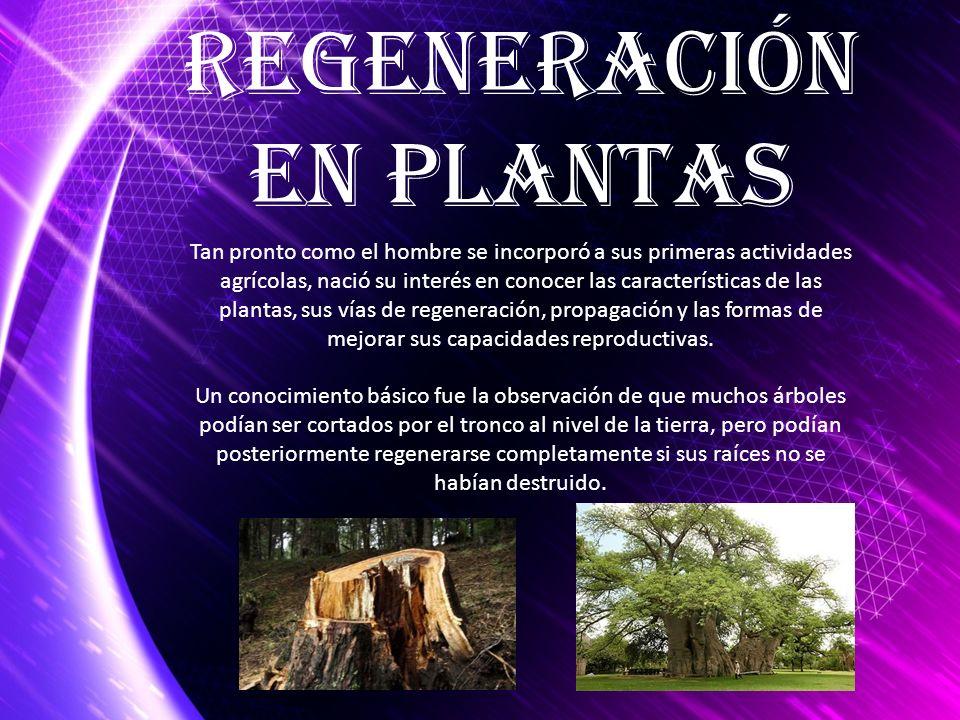 Regeneración en Plantas