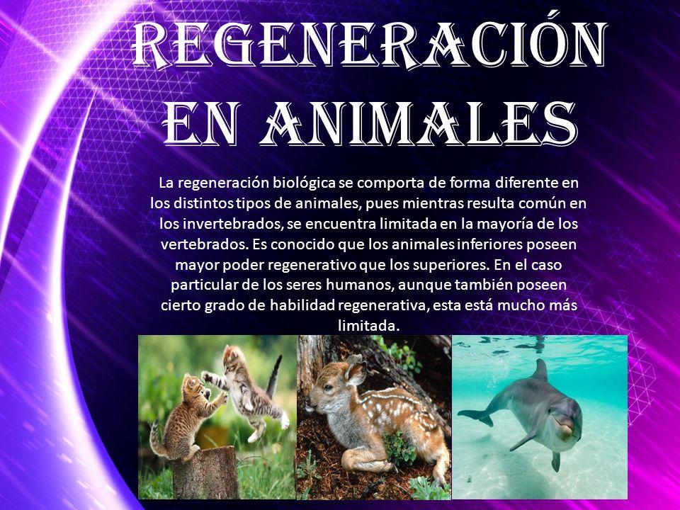 Regeneración en ANIMALES
