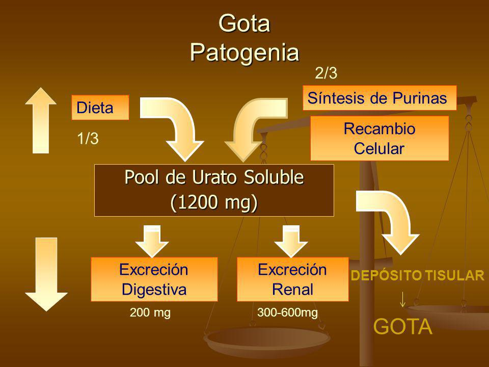 Gota Patogenia GOTA Pool de Urato Soluble (1200 mg) 2/3