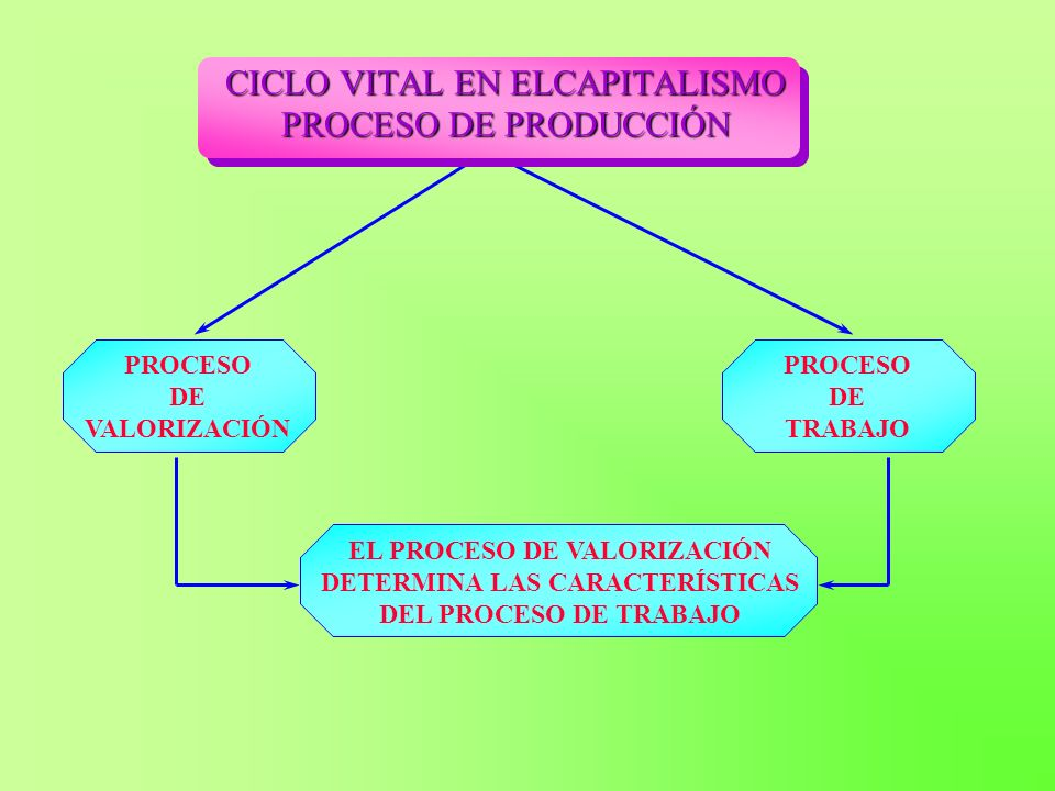 CICLO VITAL EN ELCAPITALISMO PROCESO DE PRODUCCIÓN