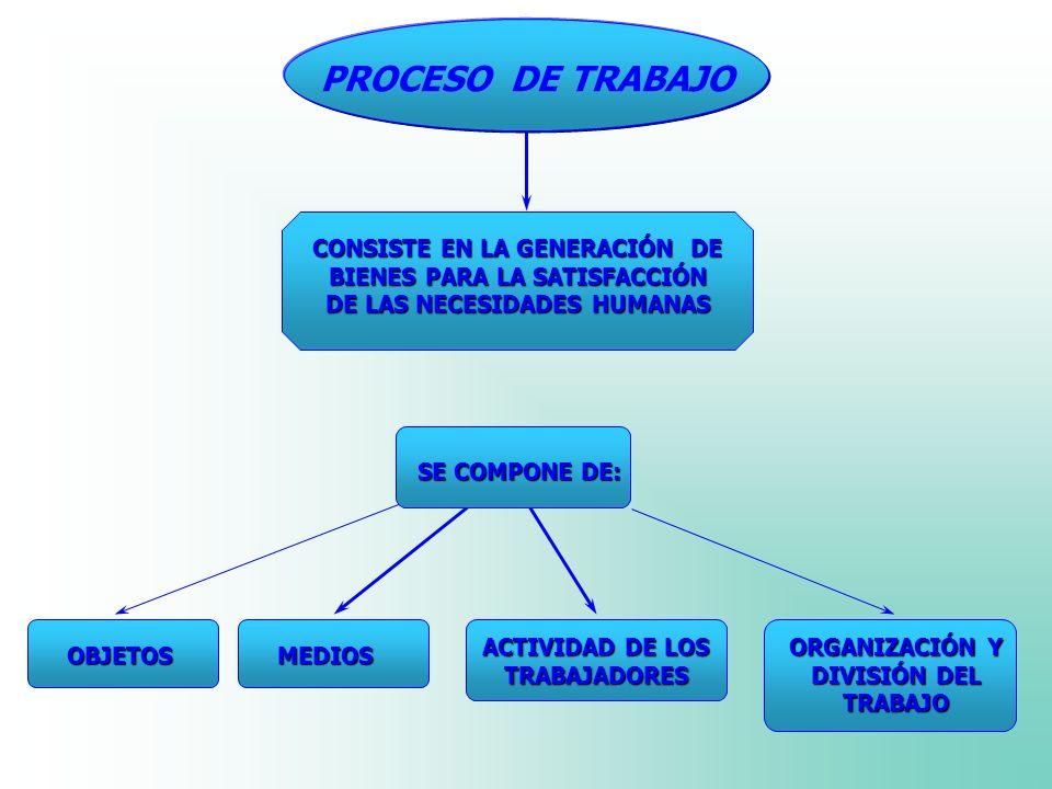 ACTIVIDAD DE LOS TRABAJADORES ORGANIZACIÓN Y DIVISIÓN DEL TRABAJO