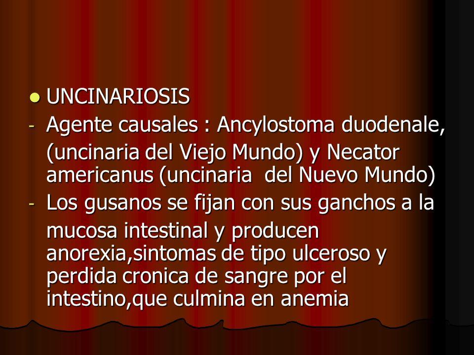 UNCINARIOSIS Agente causales : Ancylostoma duodenale, (uncinaria del Viejo Mundo) y Necator americanus (uncinaria del Nuevo Mundo)