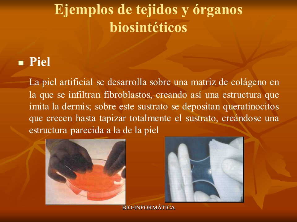 Ejemplos de tejidos y órganos biosintéticos
