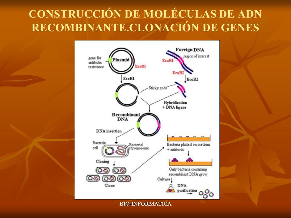 CONSTRUCCIÓN DE MOLÉCULAS DE ADN RECOMBINANTE.CLONACIÓN DE GENES