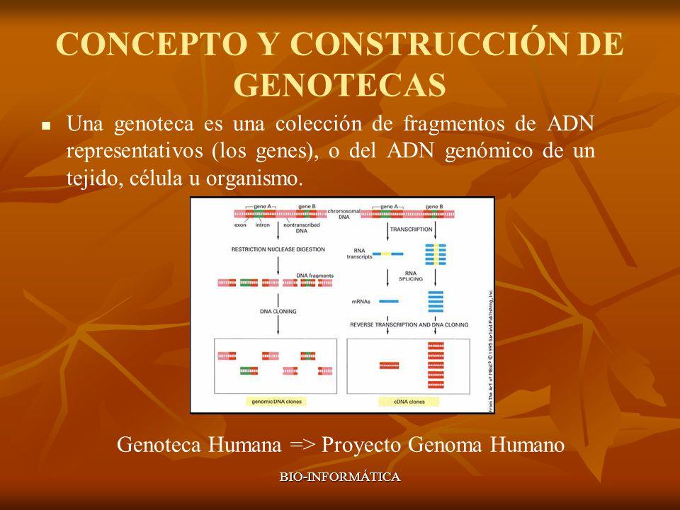 CONCEPTO Y CONSTRUCCIÓN DE GENOTECAS