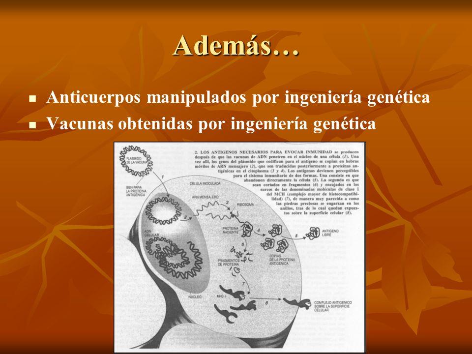 Además… Anticuerpos manipulados por ingeniería genética