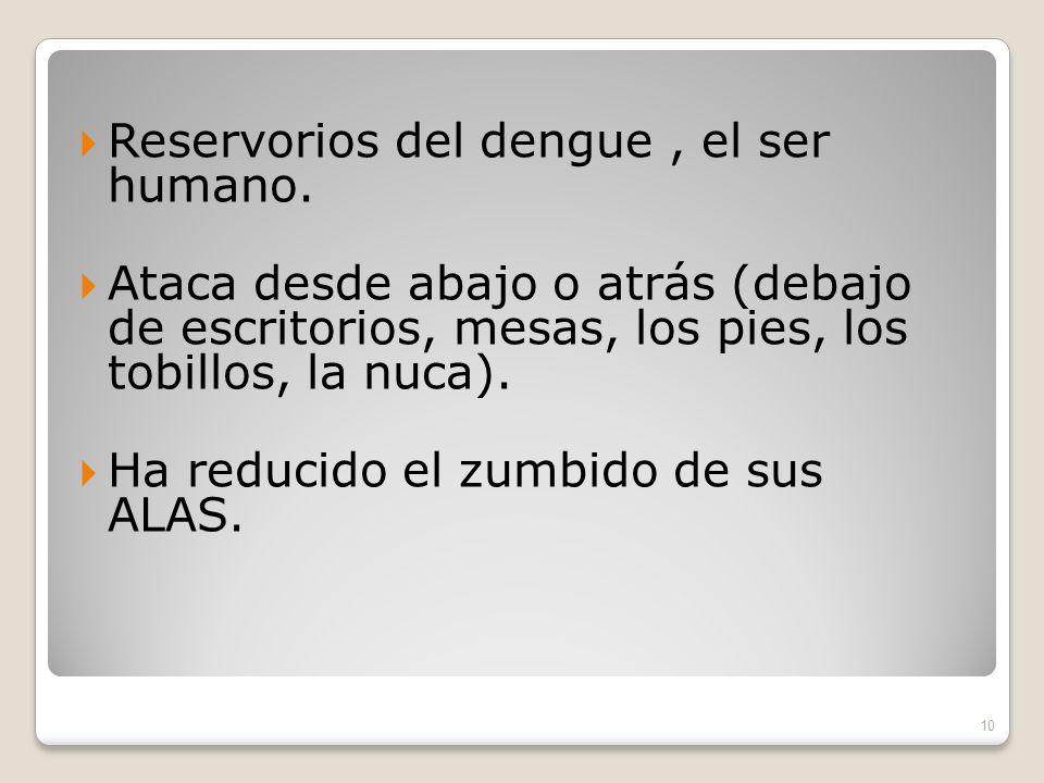 Reservorios del dengue , el ser humano.
