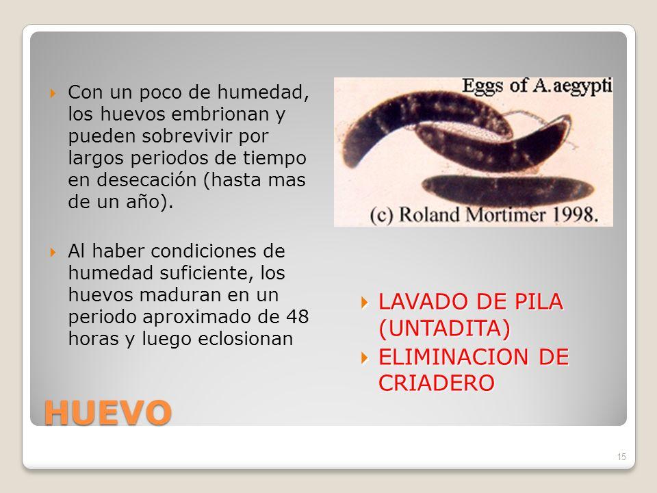HUEVO LAVADO DE PILA (UNTADITA) ELIMINACION DE CRIADERO