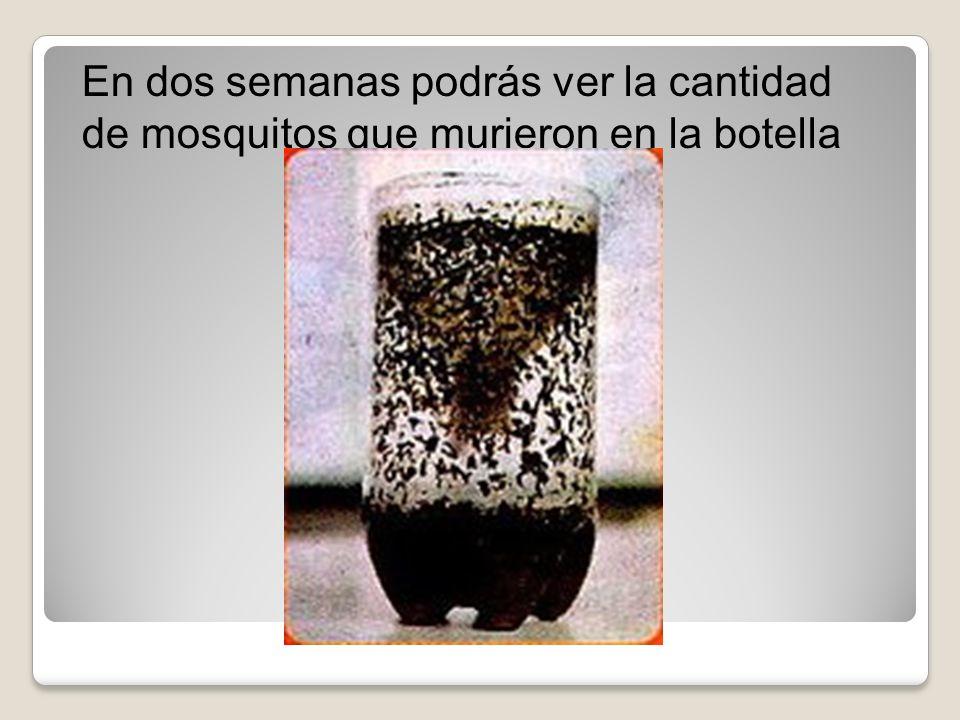 En dos semanas podrás ver la cantidad de mosquitos que murieron en la botella