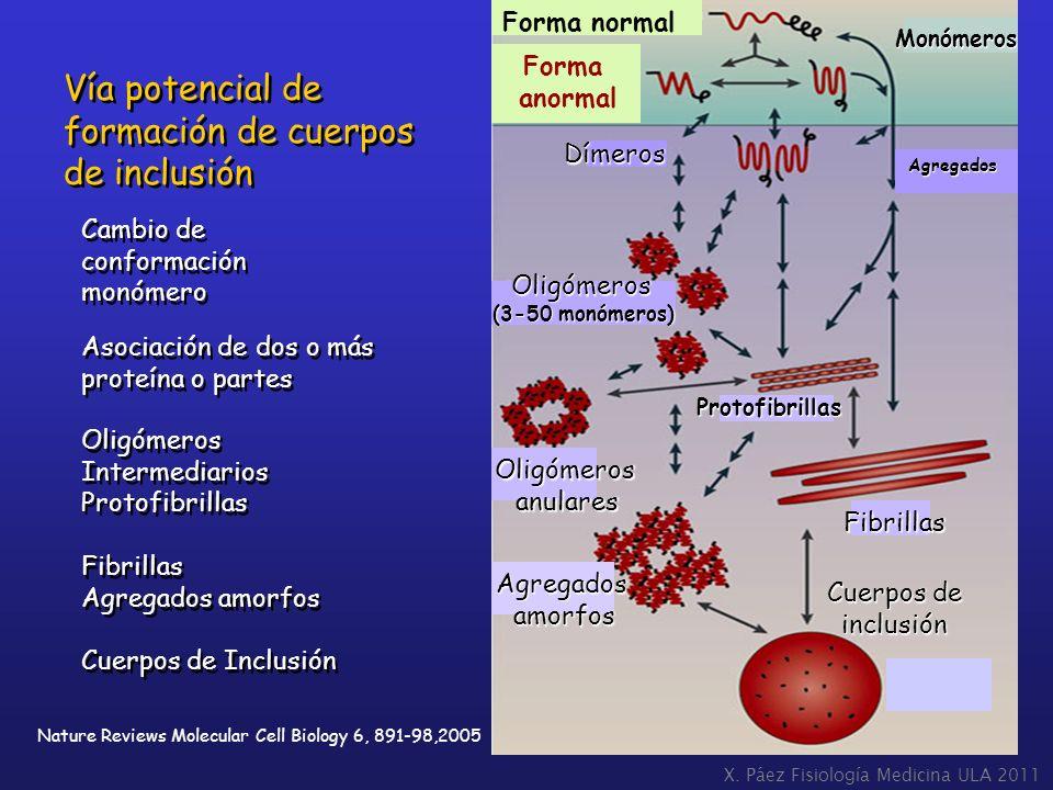 Vía potencial de formación de cuerpos de inclusión Forma normal Forma
