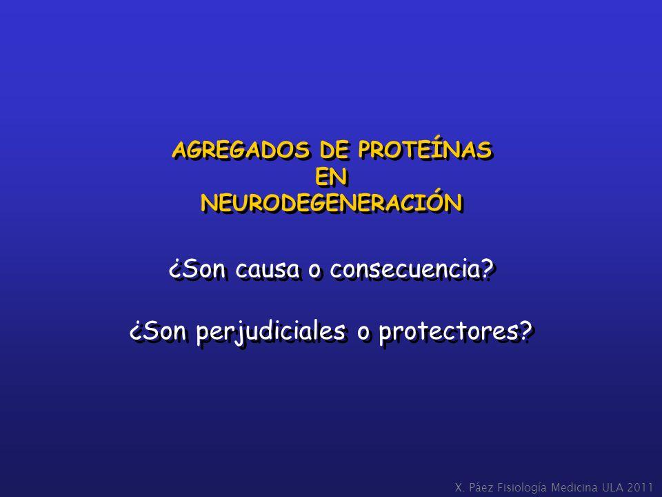 AGREGADOS DE PROTEÍNAS