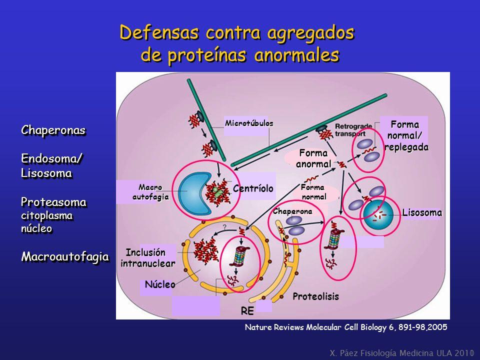 Defensas contra agregados de proteínas anormales
