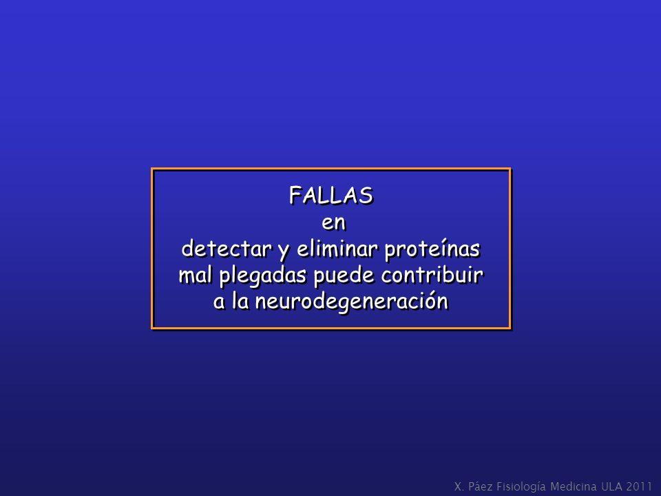 detectar y eliminar proteínas mal plegadas puede contribuir