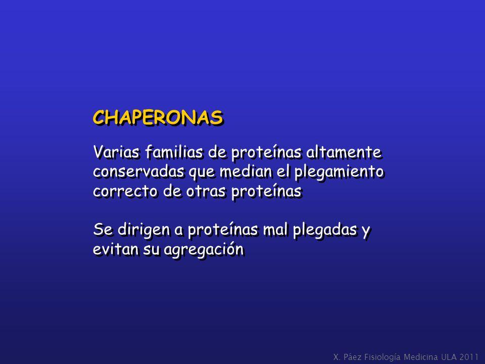 CHAPERONAS Varias familias de proteínas altamente