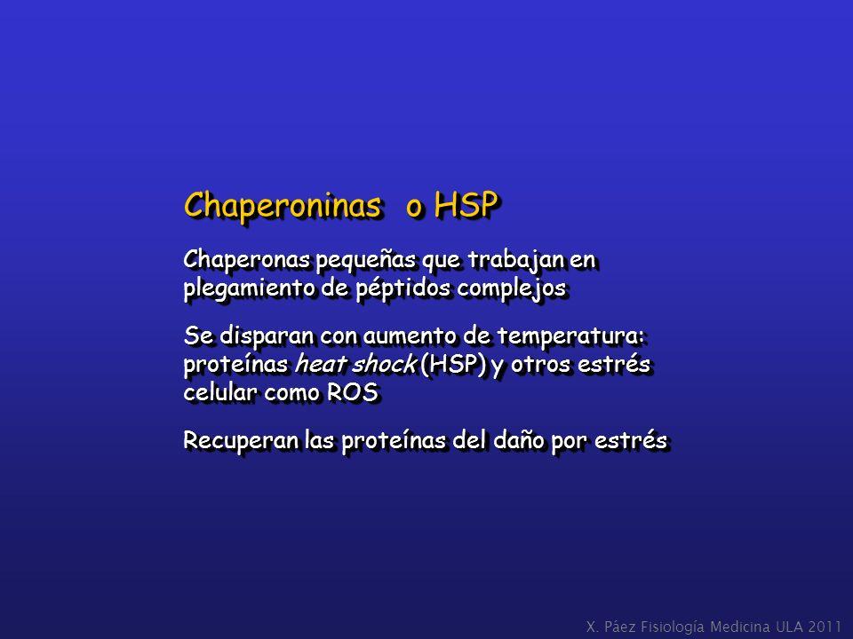 Chaperoninas o HSP Chaperonas pequeñas que trabajan en plegamiento de péptidos complejos.
