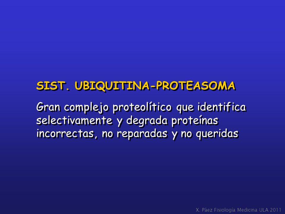 SIST. UBIQUITINA-PROTEASOMA