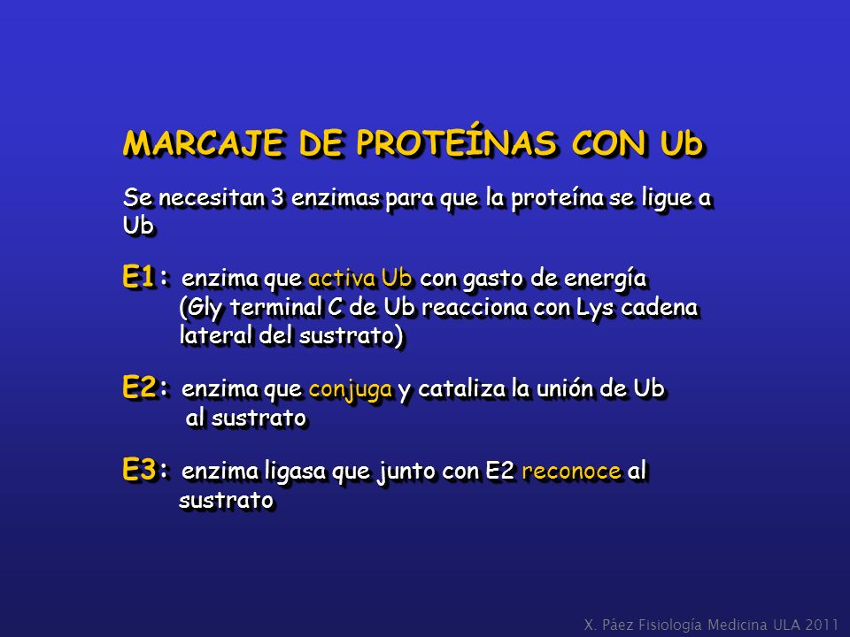 MARCAJE DE PROTEÍNAS CON Ub