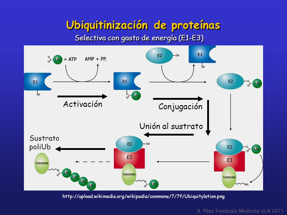 Ubiquitinización de proteínas