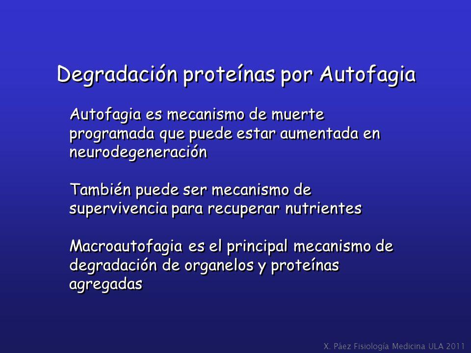 Degradación proteínas por Autofagia