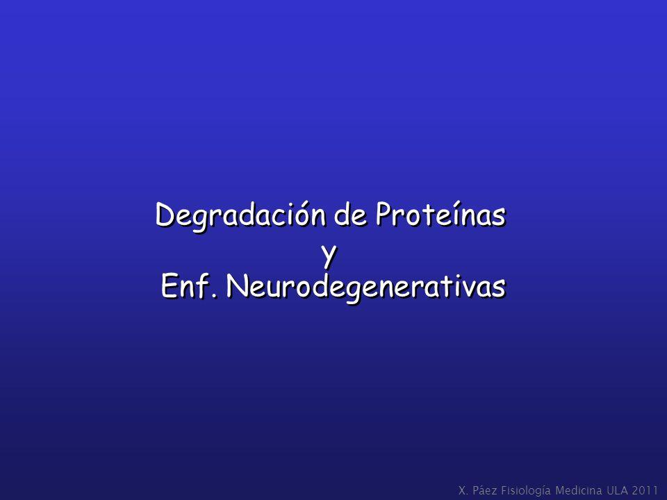 Degradación de Proteínas y Enf. Neurodegenerativas
