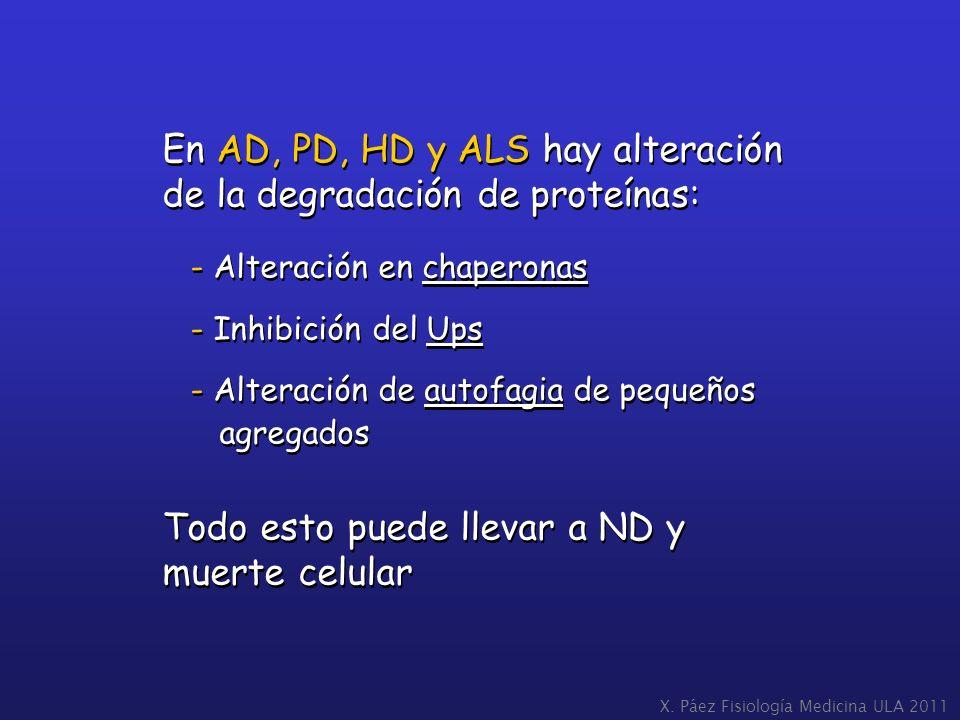 En AD, PD, HD y ALS hay alteración de la degradación de proteínas: