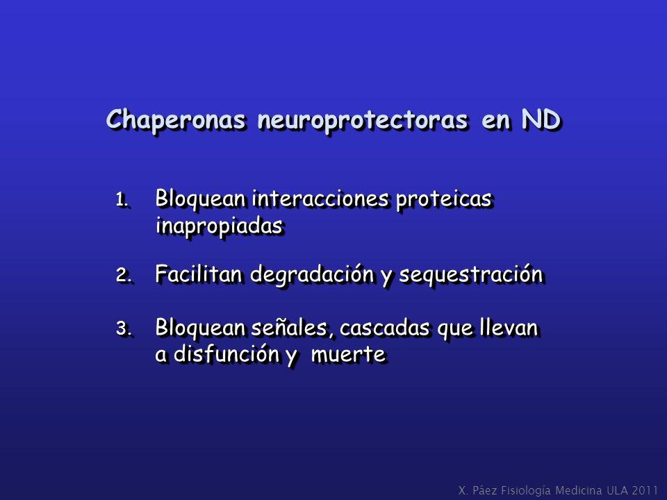 Chaperonas neuroprotectoras en ND