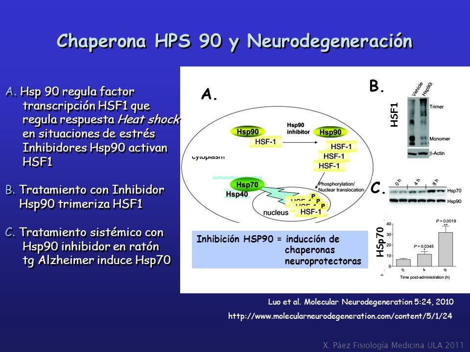 Chaperona HPS 90 y Neurodegeneración