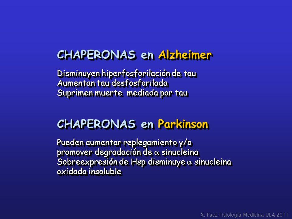 CHAPERONAS en Alzheimer
