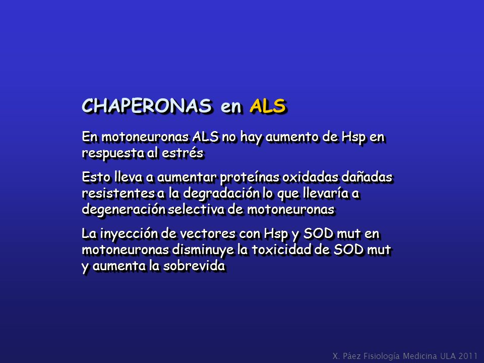 CHAPERONAS en ALS En motoneuronas ALS no hay aumento de Hsp en respuesta al estrés.