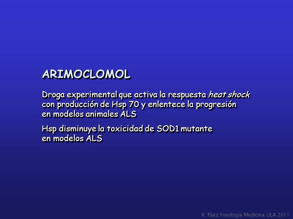 ARIMOCLOMOL Droga experimental que activa la respuesta heat shock