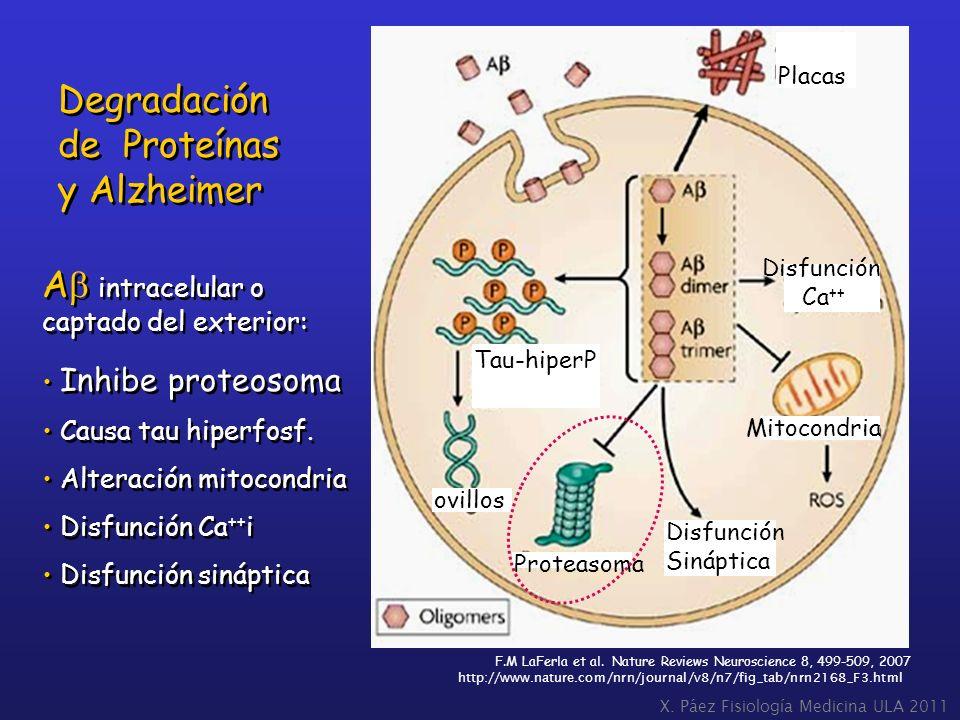 Degradación de Proteínas y Alzheimer Ab intracelular o