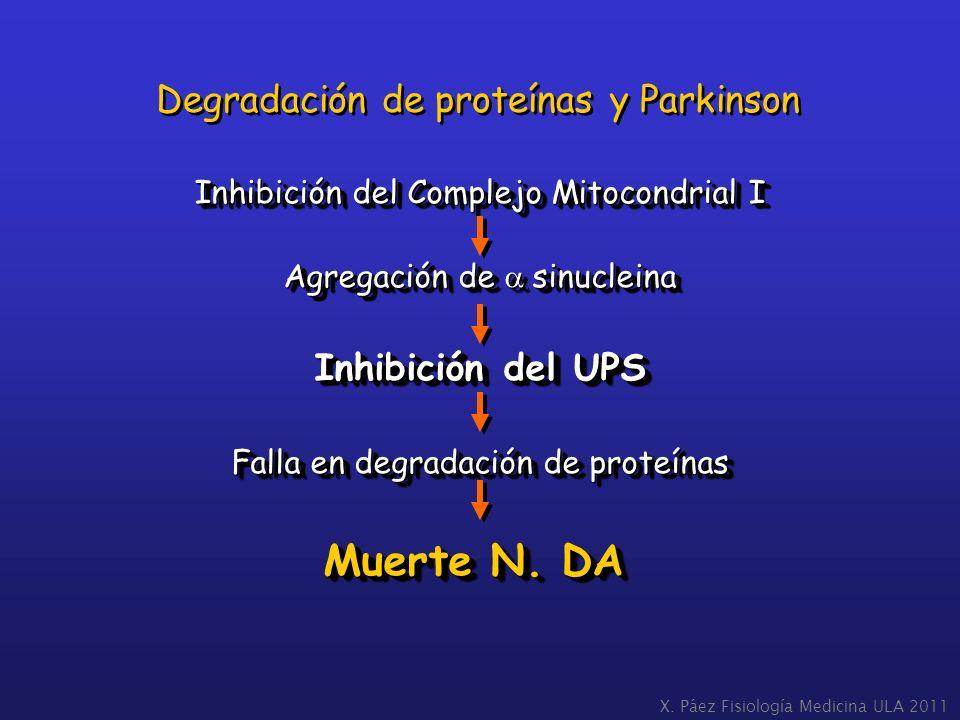 Muerte N. DA Degradación de proteínas y Parkinson Inhibición del UPS