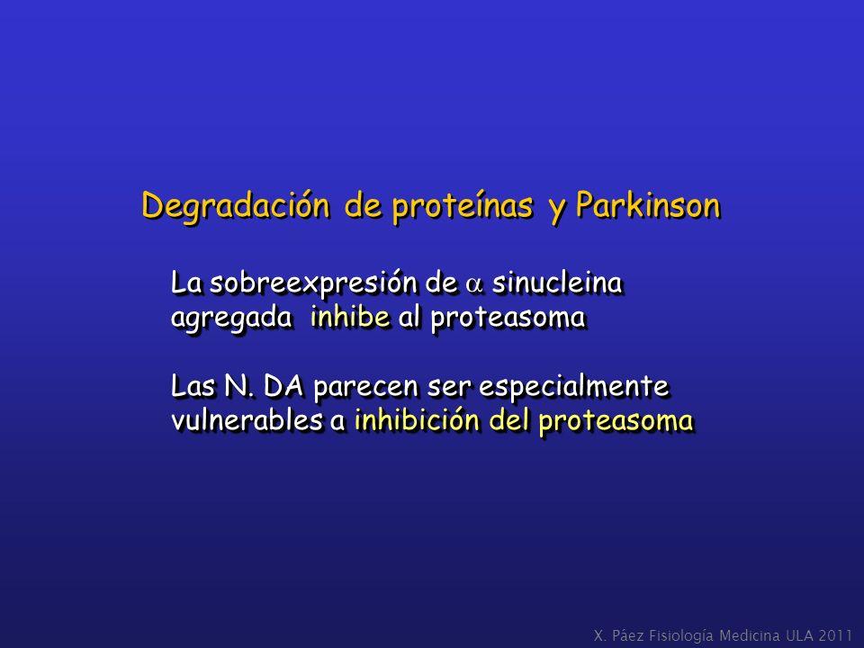 Degradación de proteínas y Parkinson