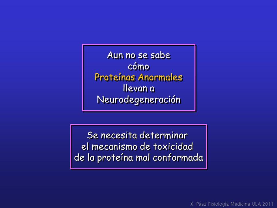 llevan a Neurodegeneración