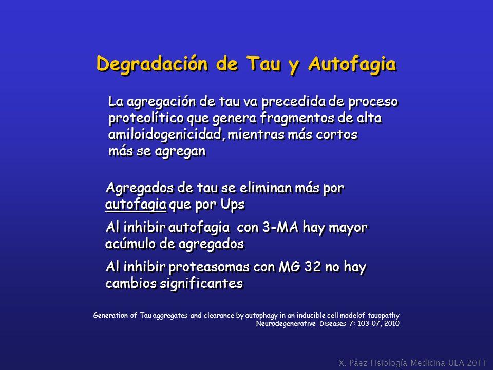 Degradación de Tau y Autofagia
