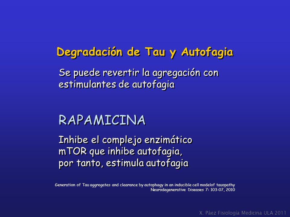 RAPAMICINA Degradación de Tau y Autofagia