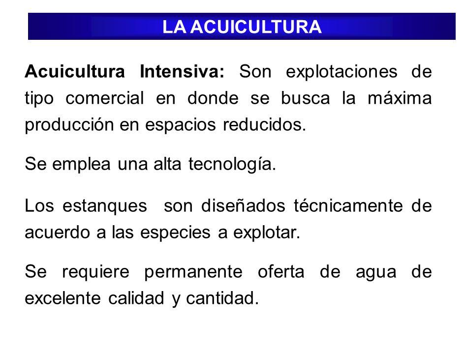 LA ACUICULTURA Acuicultura Intensiva: Son explotaciones de tipo comercial en donde se busca la máxima producción en espacios reducidos.
